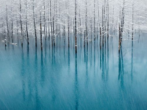"""nationalgeographicdaily:    Blue Pond, HokkaidoPhoto: Kent Shiraishi  The """"blue pond"""" of the famous tourist resort in Biei, Hokkaido, Japan is a place where many tourists gather in spring, summer, and autumn. However, since this pond freezes in winter, nobody is there during that period. This photograph was taken during the first snow of the season as it fell over the blue pond."""