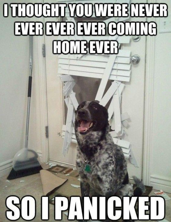 So... @Jessi Parrett Furlo laughed uncontrollably because it reminds her of our dog.