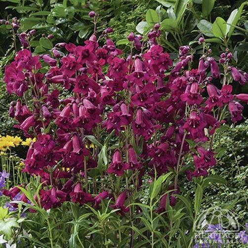 Die Besten 17 Bilder Zu Bouquets, Blooms, And Butterflies Auf ... Welche Blumen Im Schatten Garten Pflanzen