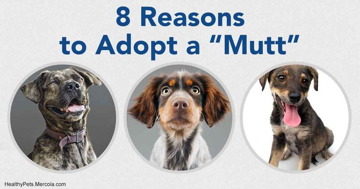 Mixed breed dogs are special for many reasons, but every one that is adopted is a life saved; whatever lifestyle, there's a dog out there who will fit right in. https://healthypets.mercola.com/sites/healthypets/archive/2017/12/02/celebrating-national-mutt-day.aspx?utm_source=petsnl&utm_medium=email&utm_content=art1&utm_campaign=20171202Z2&et_cid=DM167786&et_rid=139063540