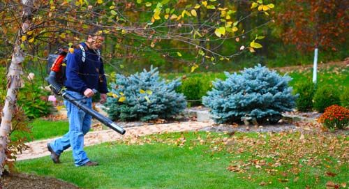 Clean The Yard with Professional Tree Cutting Service #treecutting #services