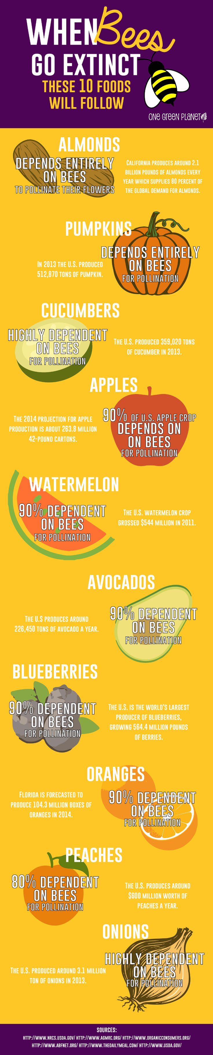 When Bees Go Extinct, These 10 Foods Will Follow | One Green Planet | This is bad, very bad. None of us want to lose even one of these 10 foods; however, you can bet they aren't the only foods we'll lose. Wake up people. Stop listening to idiots that are speaking for corporate greed. Educate your damn selves and start working against corporate greed and for people! Please read and share this outstanding article.