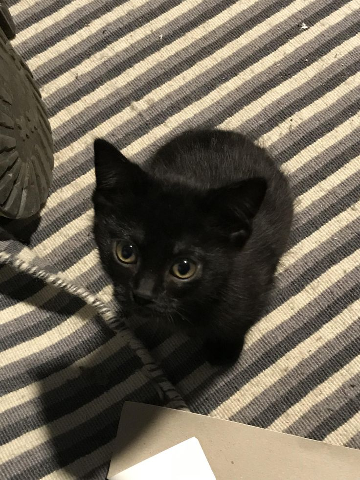 Just got a KITTEN!! Tell me what you think of her?