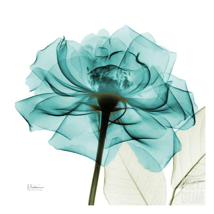 Teal Rose • Albert Koetsier