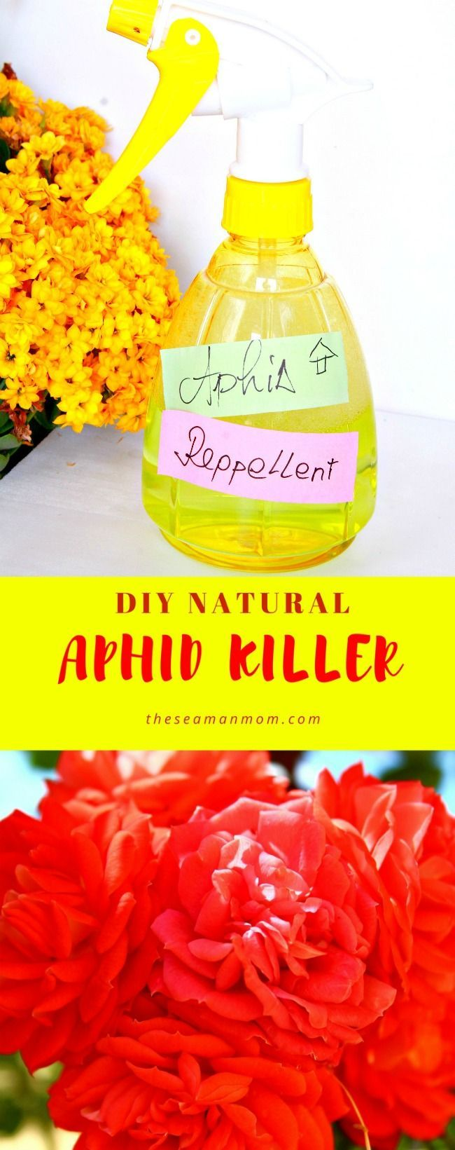 NATURAL DIY APHID REPELLENT- Getting rid of aphids in your garden doesn't have to involve toxic chemicals when you can make your own natural DIY aphid repellent in just a couple of minutes!