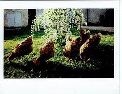 LA PRÉE - 36100 SEGRY - FRANCE  photographies instantanées Fujifilm Mini film instax (86 × 54mm) et Instax WIDE film (86 × 108mm) - Sylvain DUCOULOMBIER
