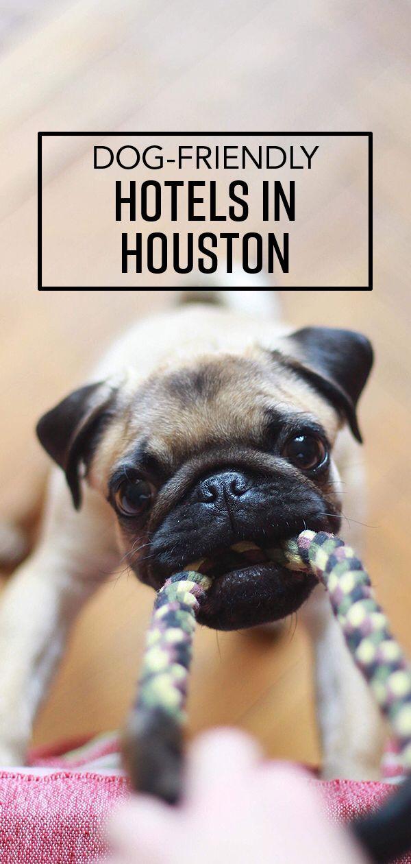 Pet Friendly Hotels In Houston Pet Friendly Hotels Dog Friendly Hotels Dog Friends