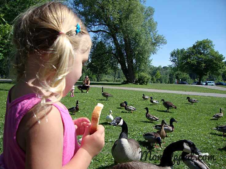 Summer ideas - take the kids to feed the birds http://www.momupped.com/feed-ducks-and-geese.html