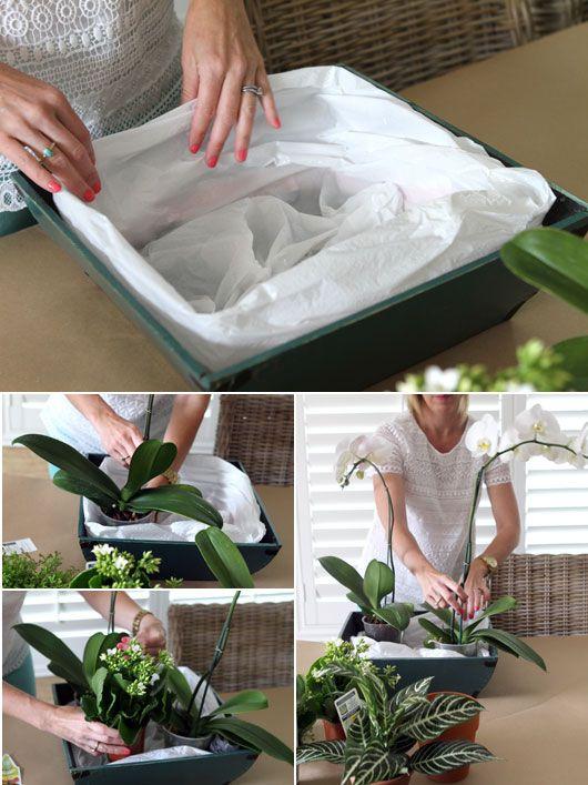 DIY-orchid-centerpiece-step-1