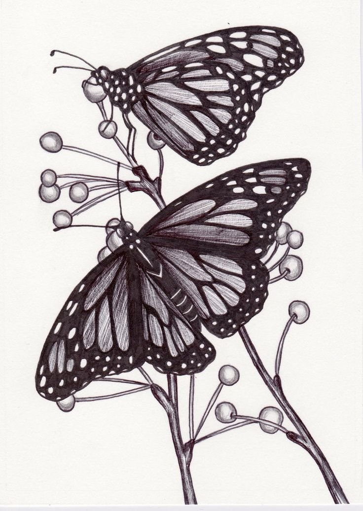 17 Best images about Drawings - Monarch Butterfly on ...