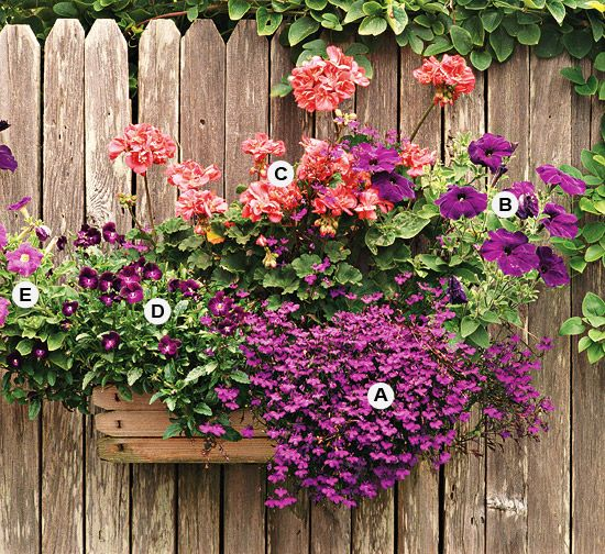 Use contrasting colors to create drama in your container for gardening. Here, shades of purple mix well together -- and make a stunning contrast for a salmon geranium. This planting grows best in full sun. A. Lobelia erinus -- 3 B. Petunia 'Blue Velvet' -- 1 C. Geranium (Pelargonium 'Fantasia Salmon') -- 2 D. Viola 'Sorbet Purple Duet' -- 2 E. Lavender pink Petunia -- 1