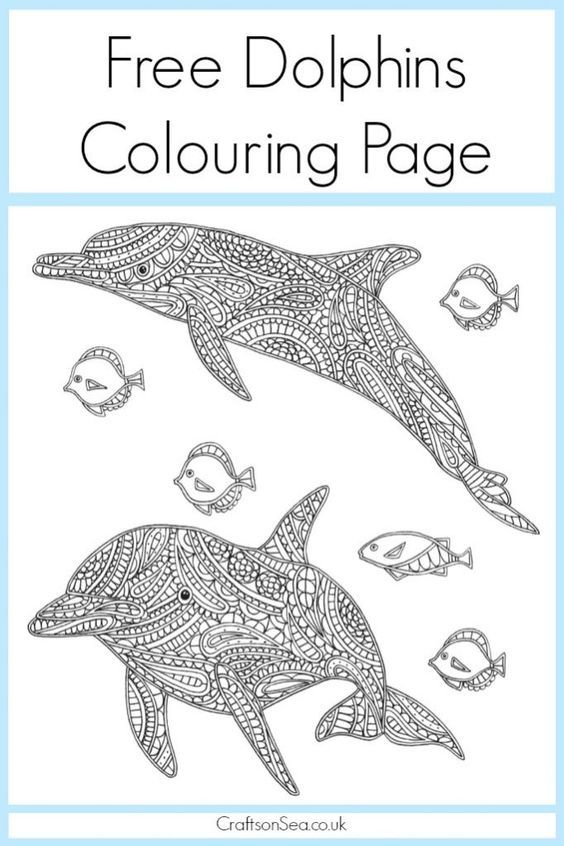 15 best Coloring Pages Dolphins and Whales images on Pinterest