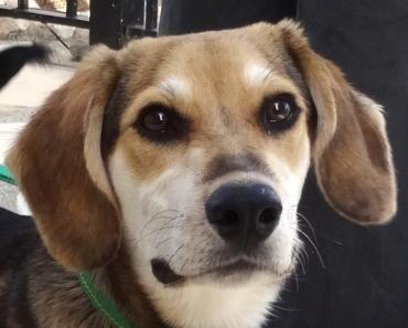 Monty wurde in einem Dorf herumirrend aufgegriffen und kam in eine Pflegestelle. Dort zeigt er sich als verspielter, lieber und sehr gut sozialisierter Hund. Er liebt die anderen Hunde im Rudel ebenso, wie die Menschen. Monty zeigt keine besonderen Ängste und lernt schnell. Wir wünschen uns für ihn eine liebevolle und aktive Familie, die gerne Zeit mit ihm verbringt.