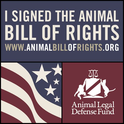 I signed the #AnimalBillofRights! Retweet if you think ALL animals deserve legal protection. animalbillofrights.org