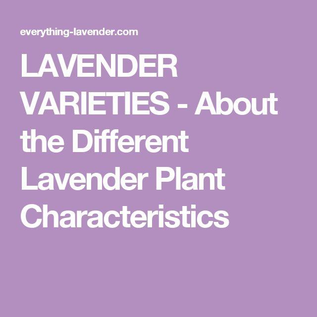 LAVENDER VARIETIES - About the Different Lavender Plant Characteristics