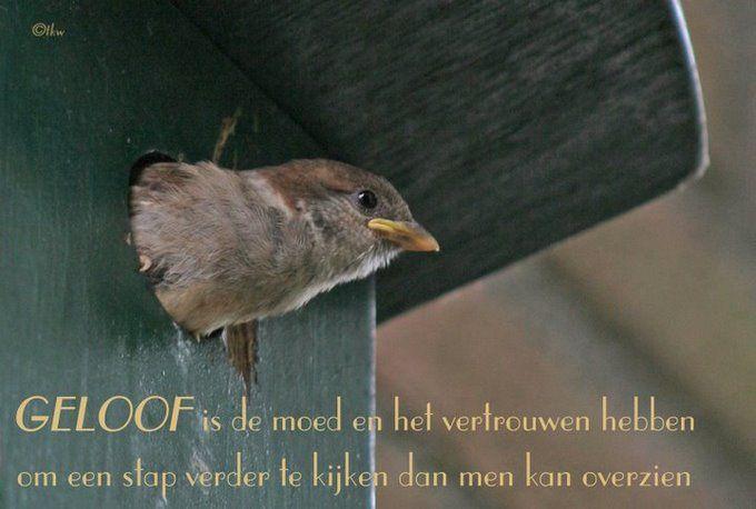 Geloof is de moed en het vertrouwen hebben www.relicards.nl