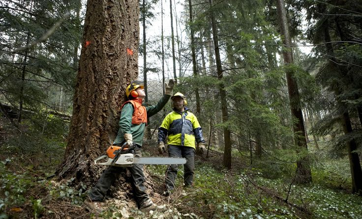 Foresters at work in the forest
