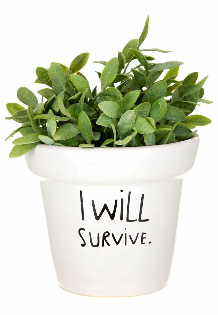 Mags - I WILL SURVIVE - Idée cadeau - blanc