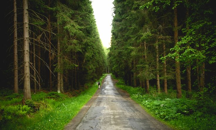 #Istebna na weekend. Czyli świerkowy las idealny