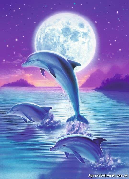Dolphins                                                                                                                                                                                 Más