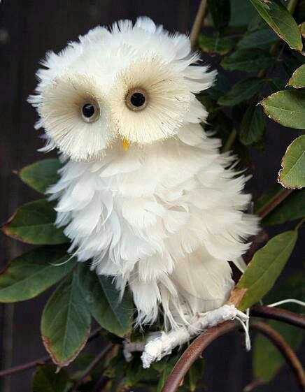 Fake, but fluffy, white owl. | Beware Internet Trickery ...