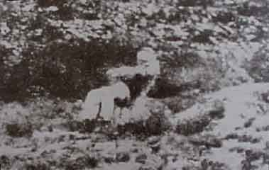 Photo of execution of Scheepers, he has just been shot by a firing squad and his body is slumping backwards. The effects of the Anglo-Boer War left deep scars - it was exacerbated by a number of trials. From April 1901 the trial of rebels and captured Boers accused of atrocities were in the hands of the military authorities. Although many of those accused were sentenced to death in Graaff-Reinet, the death sentences on only 8 men, including Gideon Scheepers, were carried out in…