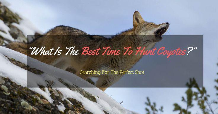 25 best ideas about coyote hunting on pinterest varmint hunting. Black Bedroom Furniture Sets. Home Design Ideas