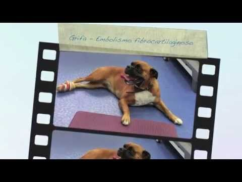 Rehabilitación Veterinaria: Embolismo fibrocartilaginoso - YouTube