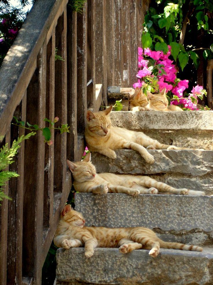 dustyfleas:  mostlycatsmostly:  Siesta (via Rudolf Wierz)  All settled. :-]  Lazy Days of Summer