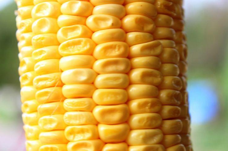 corn....