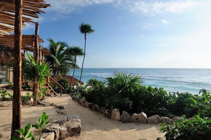 The Papaya Playa Project