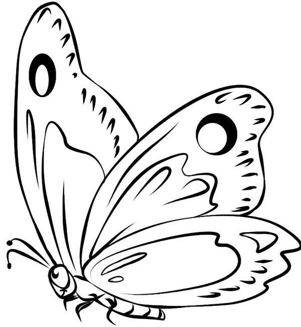 dibujos mariposas para imprimir