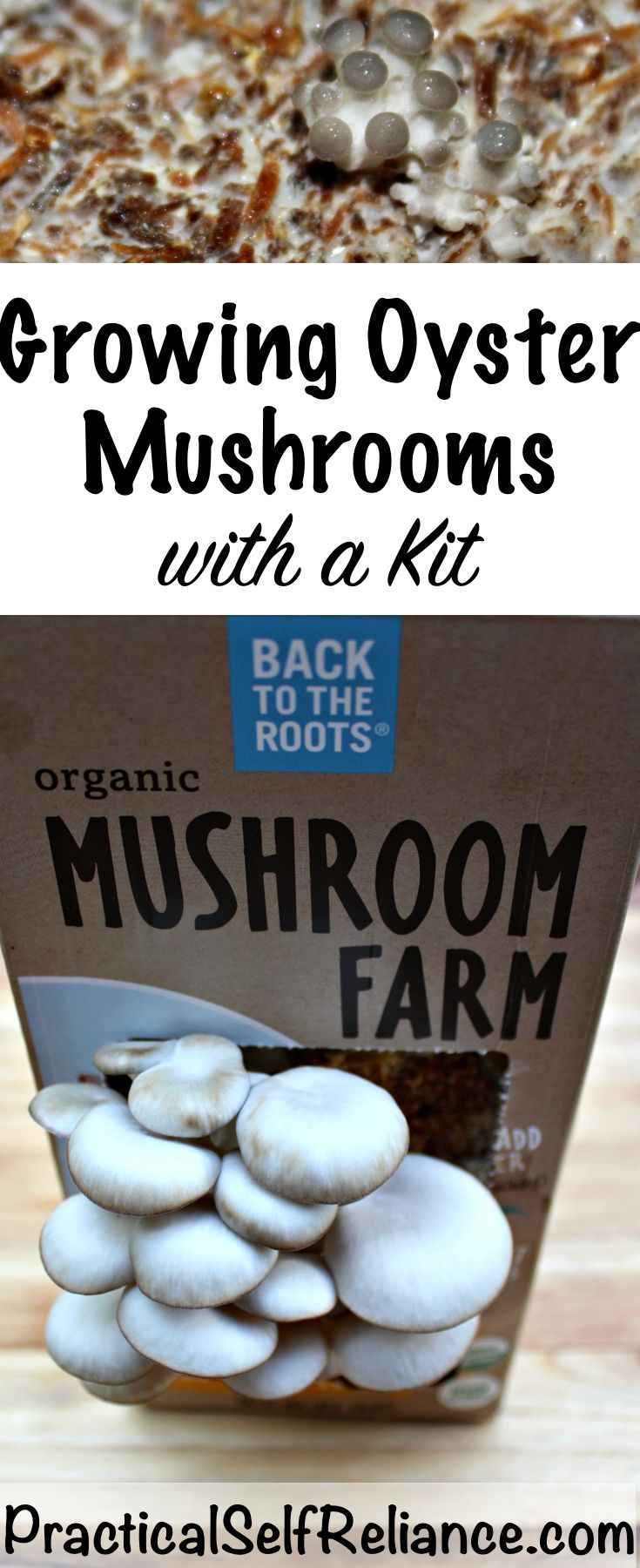 Growing Oyster Mushrooms with a Kit - Practical Self Reliance