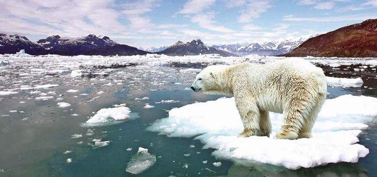 NEREA MUÑOZ ESCOLAR. Mediante esta foto, pretendo concienciar a los niños y niñas sobre el cambio climático, influenciado en gran parte por los seres humanos. Se puede observar en la imagen como un oso polar se esta quedando sin su hábitat, por lo que podría llegar el momento en que desapareciera de nuestras vidas. También se puede enseñar y transmitir numerosos temas transversales como la contaminación, la acción humana en la tierra, los animales y plantas en peligro de extinción…