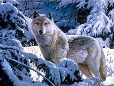 3D Wolf In Snow