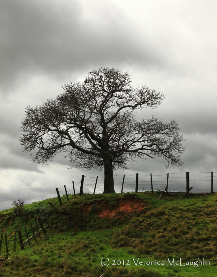 Defiance - Why else would a naked tree be standing out there, in the face of a coming storm?
