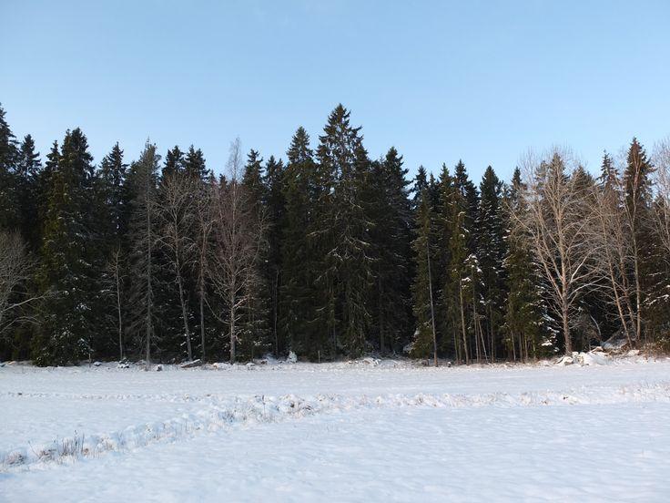 Fiby urskog