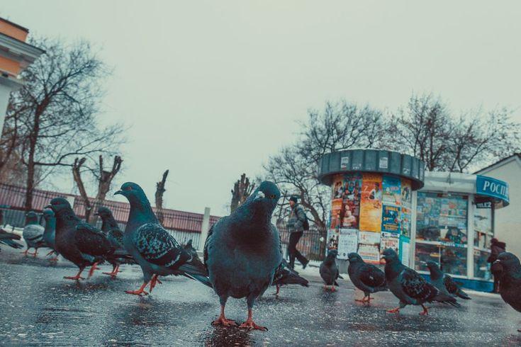 Birds by Michael Moyseyanchik