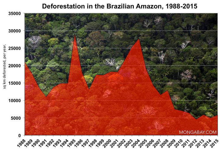 Why is Brazil regressing in its fight against deforestation?