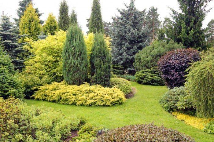 Best 25 Winter Trees Ideas On Pinterest: Best 25+ Evergreen Garden Ideas On Pinterest