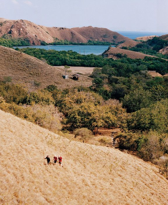 Hikers on Rinca, one of the main islands of Komodo National Park, in search of its famed giant lizards.