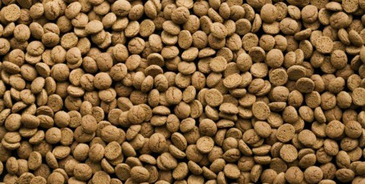 Kruidnoten zijn natuurlijk het Sinterklaaskoekje bij uitstek.  Voor dit recept heb je maar vijf ingredienten nodig: boter, bruine basterdsuiker, zelfrijzend bakmeel, melk, en natuurlijk het allerbelangrijkste: speculaaskruiden.  Vooral bij het kneden zullen de kids het leuk vinden om je te helpen. Traditionele kruidnoten zijn natuurlijk rond, maar laat ze ook eens zelf vormpjes bedenken! Plan nu je uitje @ www.streekweb.nl