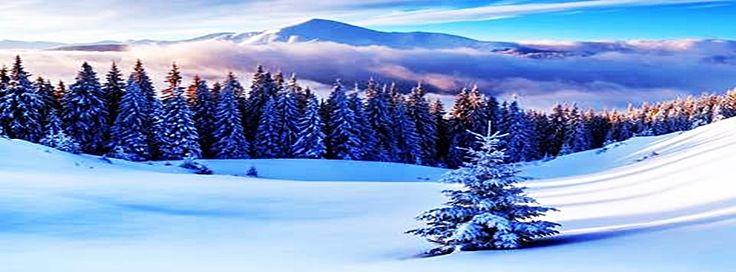erdő fenyő hegy tél