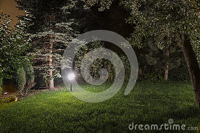 Lights in night garden with with grass,  trees .