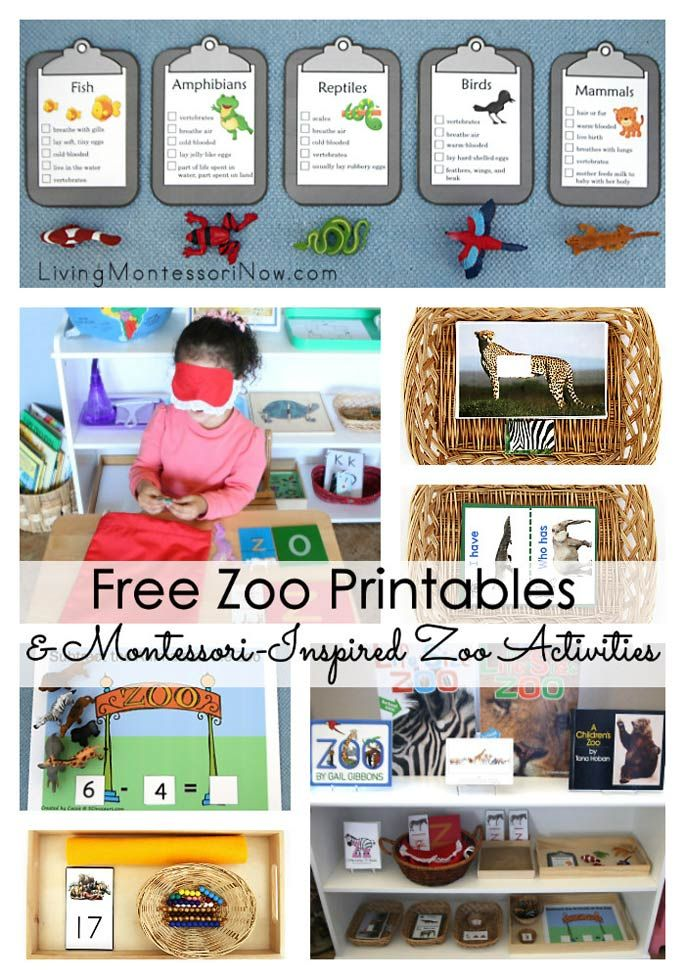 Lots of free zoo printables and Montessori-inspired zoo activities for multiple ages; perfect for home or classroom.