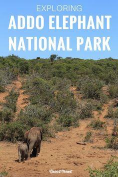 Exploring Addo Elephant National Park  #travel #travelling #destinations #travelblogger #travelstories #travelinspiration #besttravel #tourism #travelwriter #travelblog #traveldeeper #traveltheworld #Africa #AfricaTravel   http://adventuresoflilnicki.com/