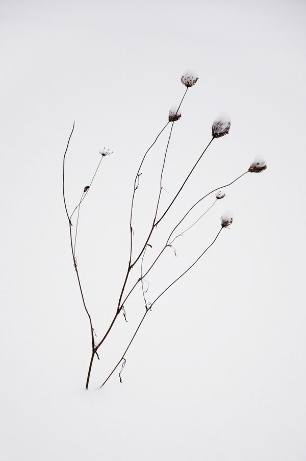 Frozen Flowers on Behance