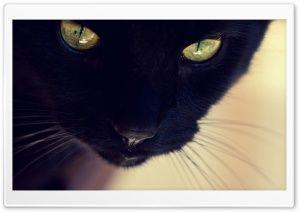 Black Cat Yellow Eyes HD Wide Wallpaper for Widescreen