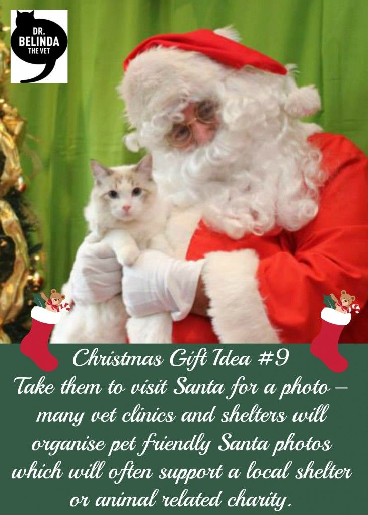 Christmas Gift Idea 9 - Take them to visit Santa for a photo – many vet clinics and shelters will organise pet friendly Santa photos which will often support a local shelter or animal related charity.