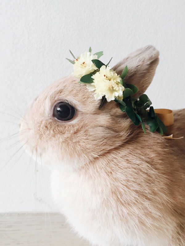 Forest yellow wildflowers and leaves flower crown gold ribbon pet bunny rabbit accessories by lalapinhandmade on Etsy https://www.etsy.com/listing/249216935/forest-yellow-wildflowers-and-leaves
